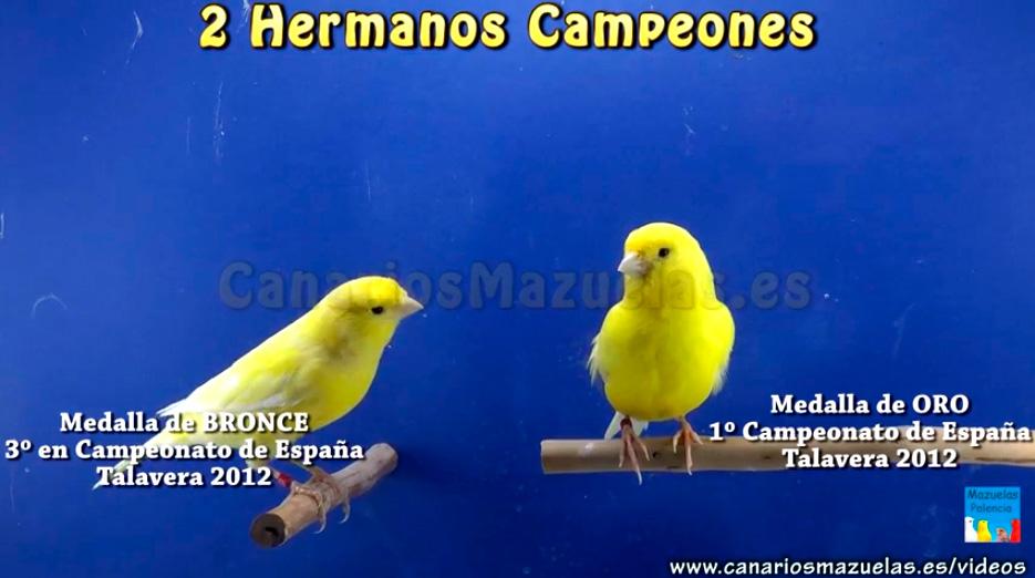 canarios-campeones-hermanos